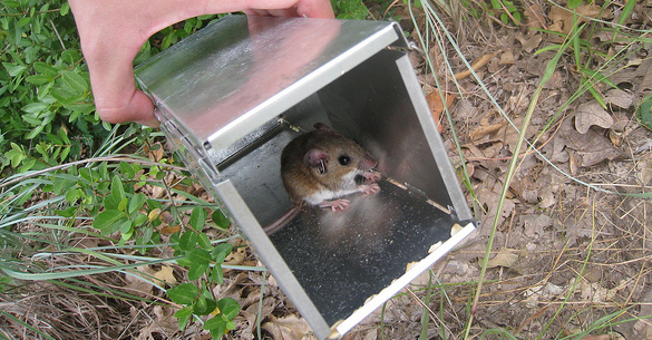 Mammal Trapping